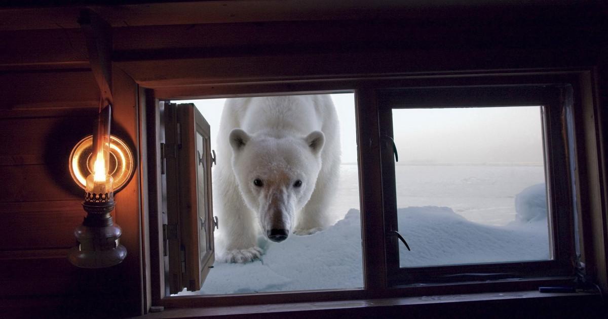 Как подготовить окна к зиме: советы Roomble.com и мнения профи