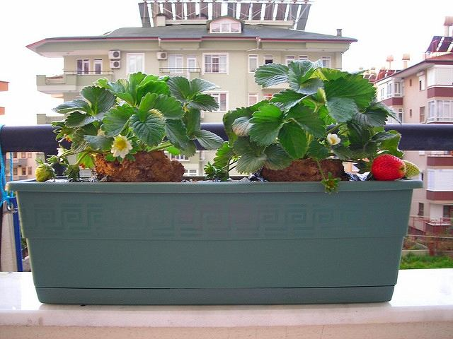 Балкон, веранда, патио в цветах: серый, светло-серый, темно-зеленый. Балкон, веранда, патио в .