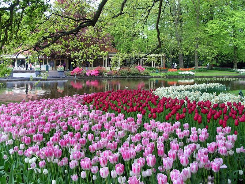 Ландшафт в цветах: красный, серый, белый, розовый, темно-зеленый. Ландшафт в .