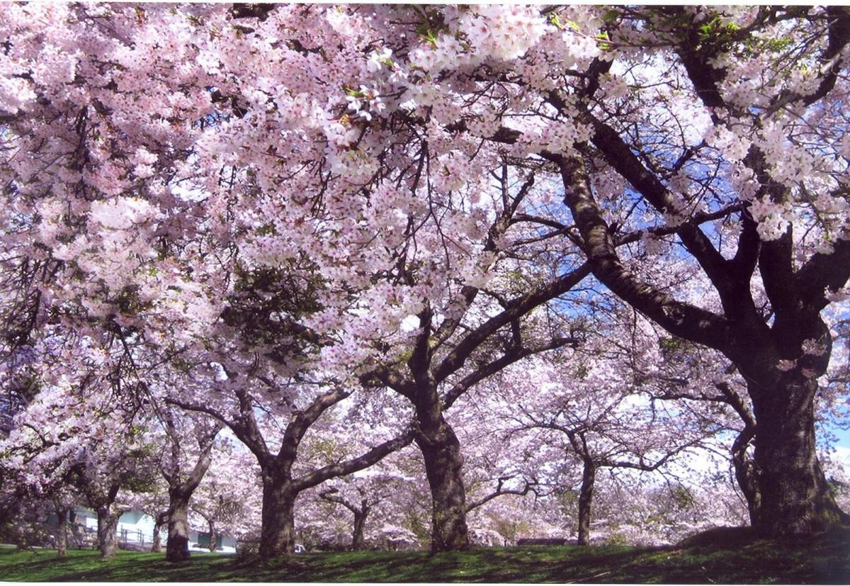 Ландшафт в цветах: серый, светло-серый, сиреневый, бежевый. Ландшафт в стилях: экологический стиль.