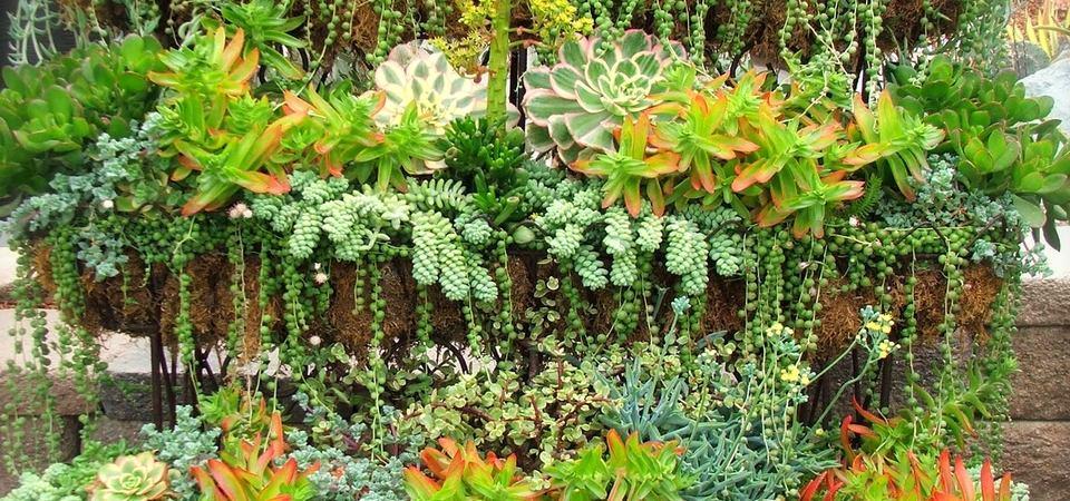 Что такое суккуленты и как сделать из них сад в квартире: идеи и советы