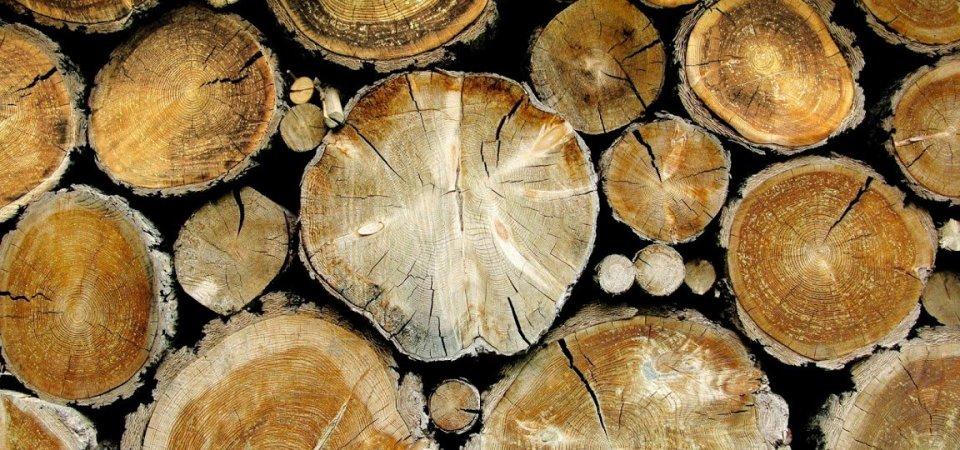 Спилы дерева в интерьере: 20 вдохновляющих примеров и мастер-класс