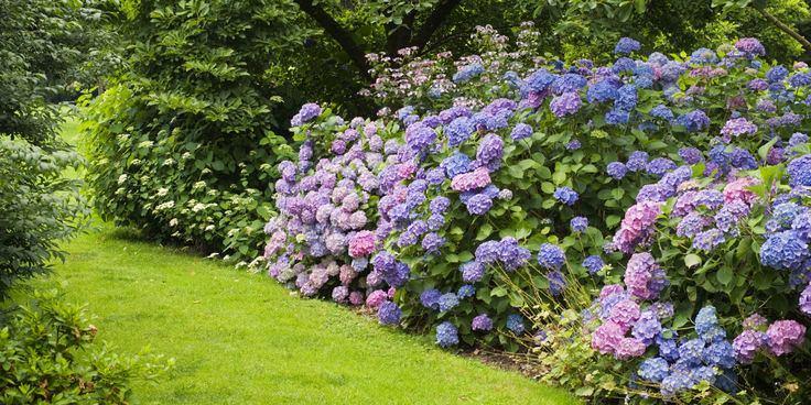 Ландшафт в цветах: фиолетовый, серый, розовый, темно-зеленый, салатовый. Ландшафт в .