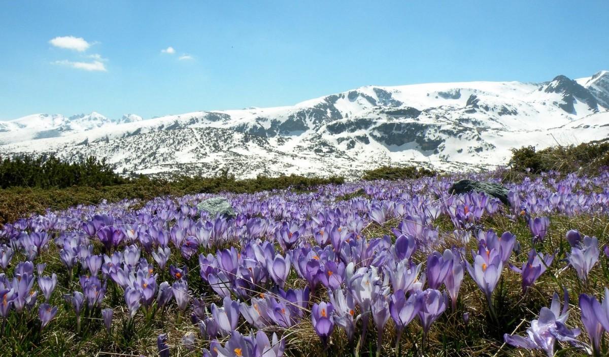 Ландшафт в цветах: голубой, фиолетовый, серый, белый, темно-зеленый. Ландшафт в .