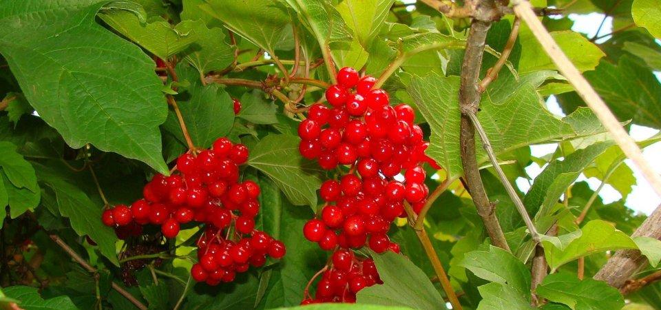 Что можно сажать в начале осени: 7 вариантов кустарников и деревьев
