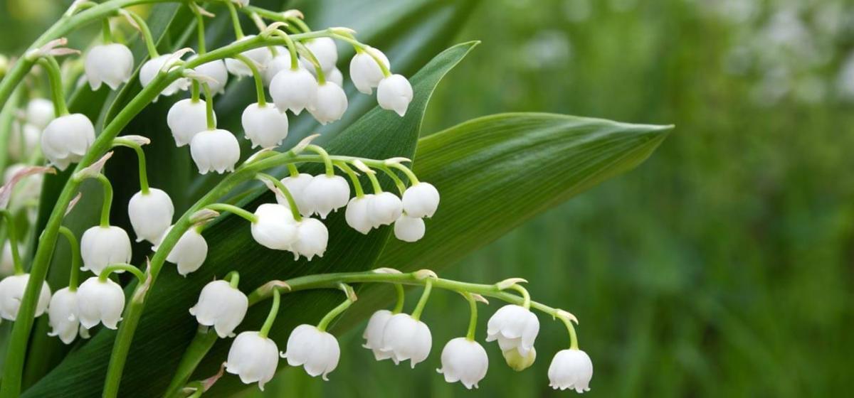 10 худших цветов для дачи
