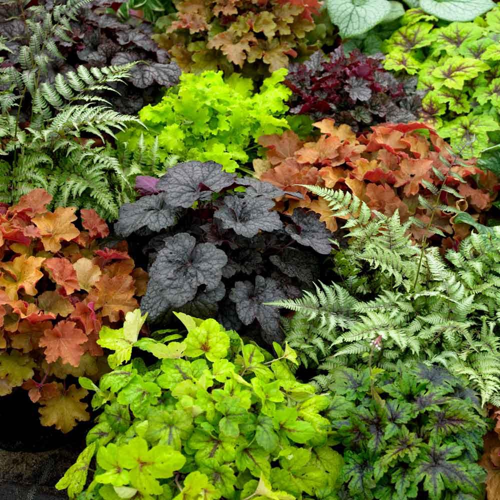 Цветастый коврик для дачного участка: 6 почвопокровных растений, цветущих всё лето